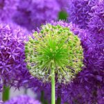 Blossom - Pixabay 030416
